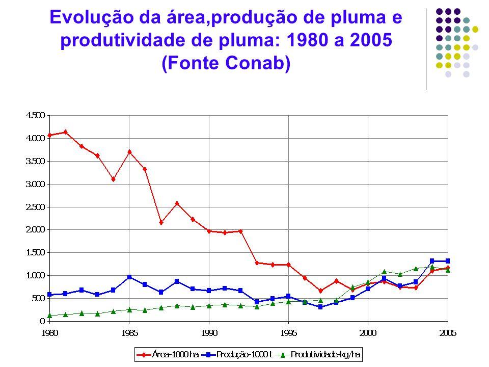 Evolução da área,produção de pluma e produtividade de pluma: 1980 a 2005 (Fonte Conab)