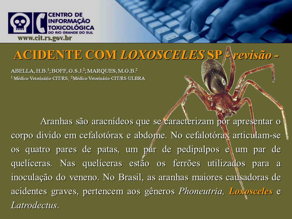 ACIDENTE COM LOXOSCELES SP - revisão -