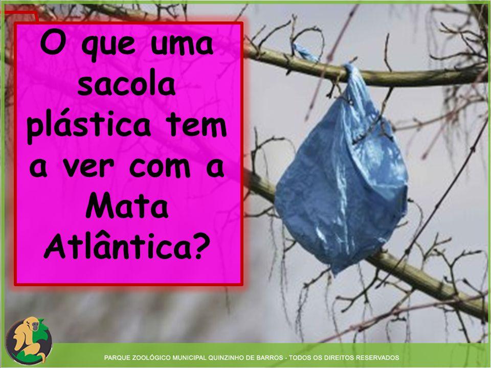 O que uma sacola plástica tem a ver com a Mata Atlântica
