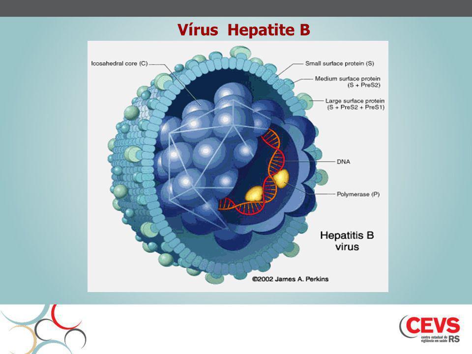 Vírus Hepatite B