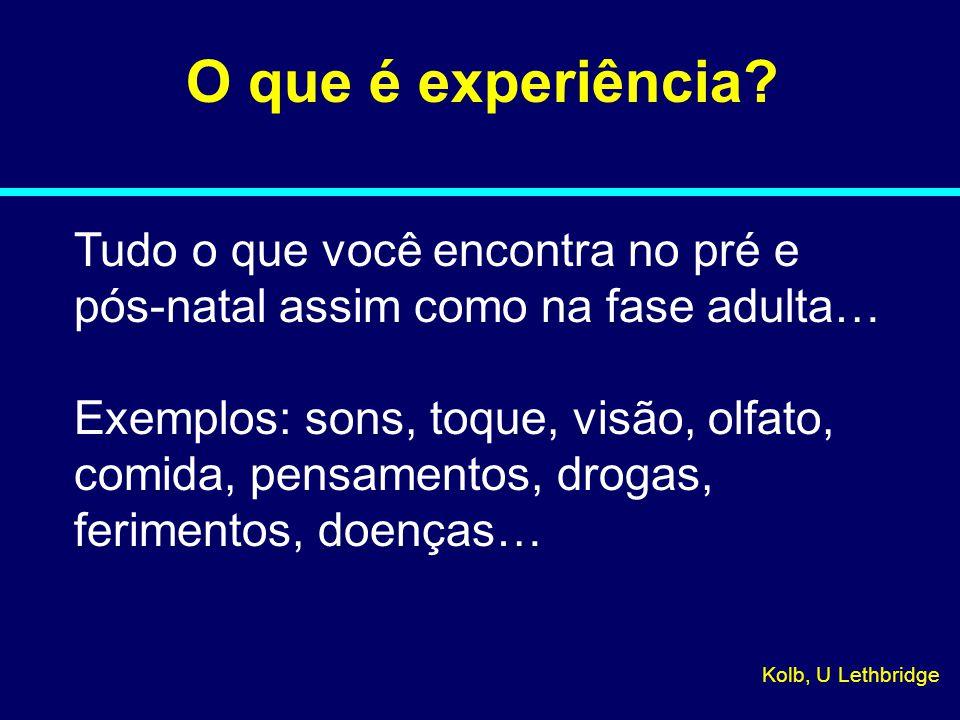 08-026 O que é experiência Tudo o que você encontra no pré e pós-natal assim como na fase adulta…