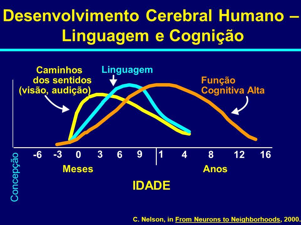 Desenvolvimento Cerebral Humano –
