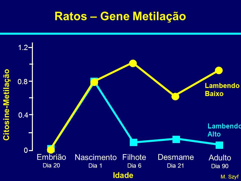 Ratos – Gene Metilação Citosine-Metilação Embrião Nascimento Filhote