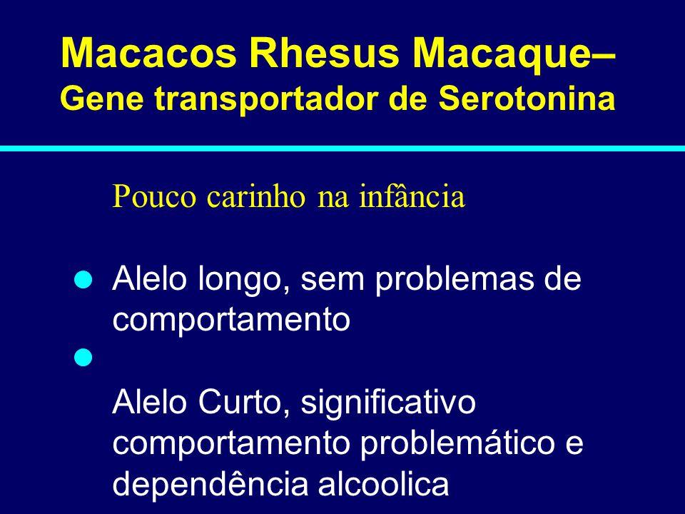 Macacos Rhesus Macaque– Gene transportador de Serotonina