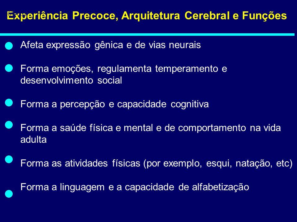 Experiência Precoce, Arquitetura Cerebral e Funções