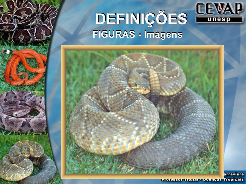 DEFINIÇÕES FIGURAS - Imagens