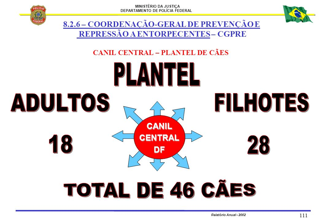 PLANTEL ADULTOS FILHOTES 18 28 TOTAL DE 46 CÃES