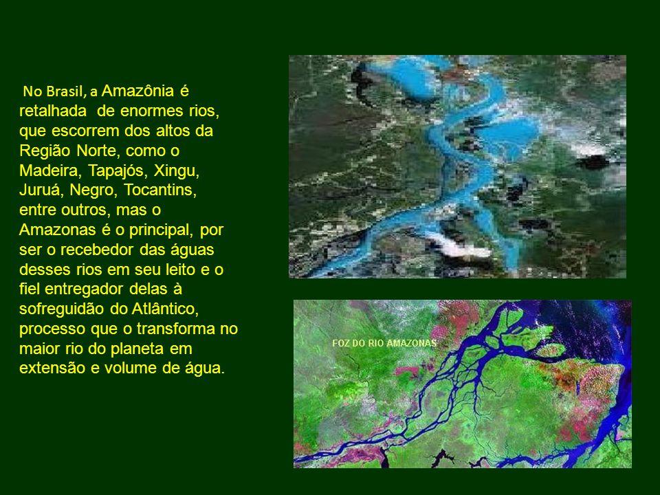 No Brasil, a Amazônia é retalhada de enormes rios, que escorrem dos altos da Região Norte, como o Madeira, Tapajós, Xingu, Juruá, Negro, Tocantins, entre outros, mas o Amazonas é o principal, por ser o recebedor das águas desses rios em seu leito e o fiel entregador delas à sofreguidão do Atlântico, processo que o transforma no maior rio do planeta em extensão e volume de água.