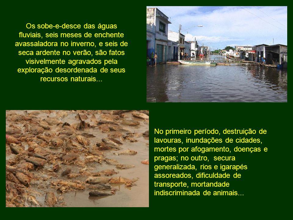 Os sobe-e-desce das águas fluviais, seis meses de enchente avassaladora no inverno, e seis de seca ardente no verão, são fatos visivelmente agravados pela exploração desordenada de seus recursos naturais...