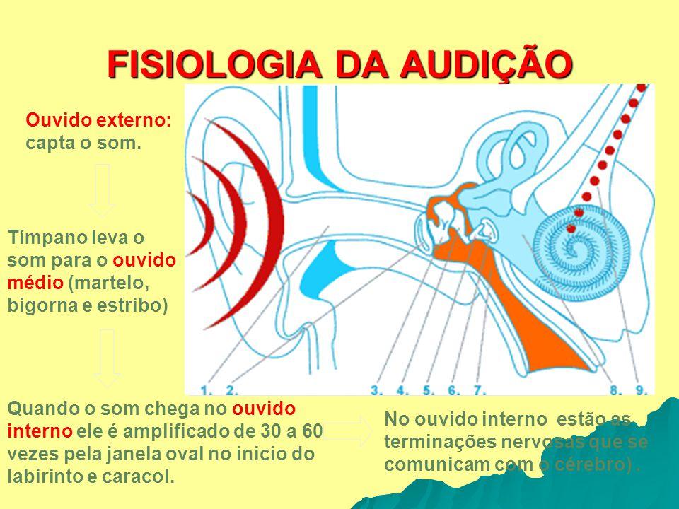 FISIOLOGIA DA AUDIÇÃO Ouvido externo: capta o som.