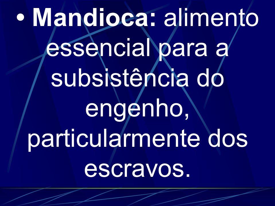 • Mandioca: alimento essencial para a subsistência do engenho, particularmente dos escravos.