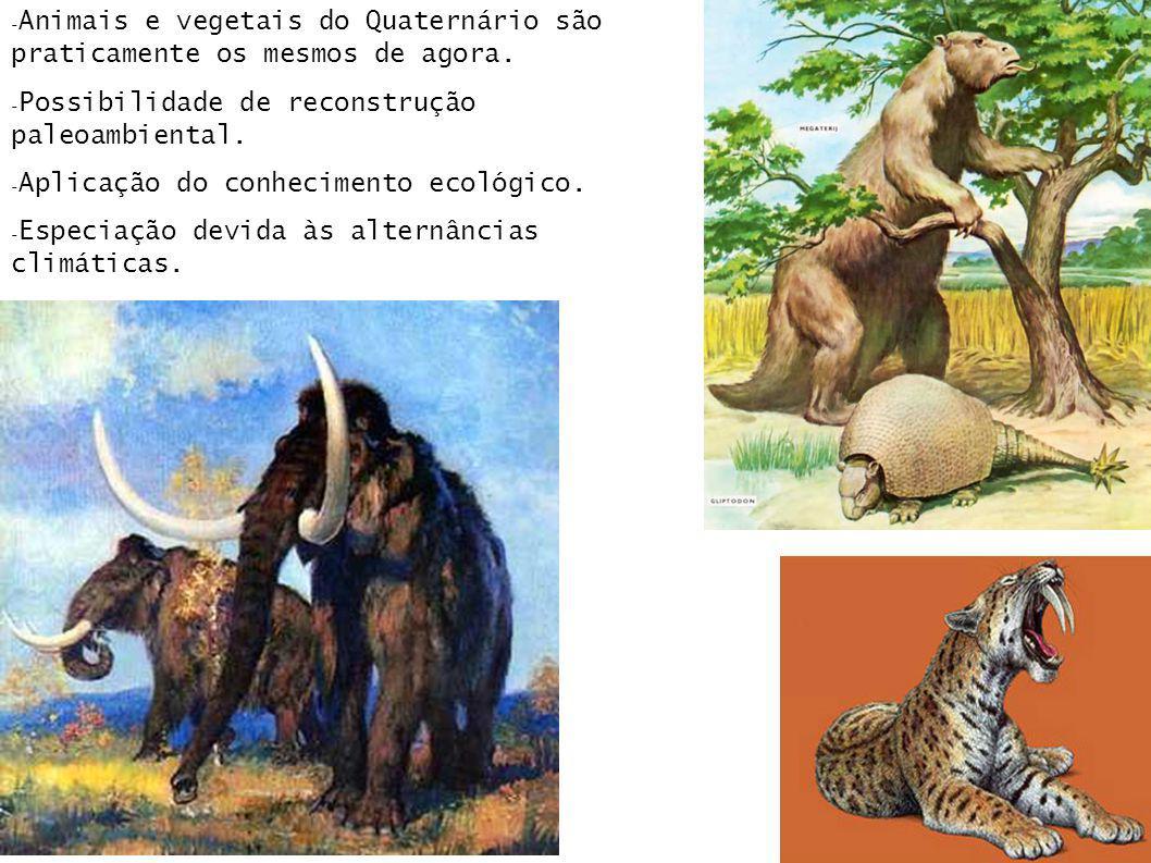 Animais e vegetais do Quaternário são praticamente os mesmos de agora.