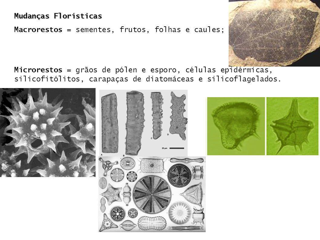 Mudanças Florísticas Macrorestos = sementes, frutos, folhas e caules;