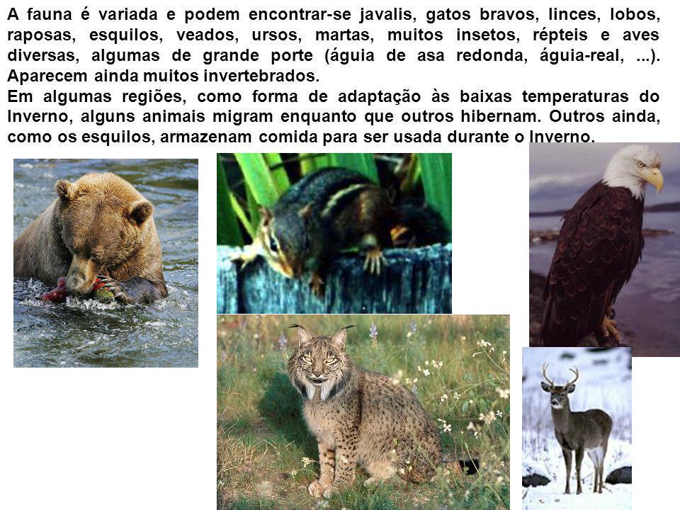 A fauna é variada e podem encontrar-se javalis, gatos bravos, linces, lobos, raposas, esquilos, veados, ursos, martas, muitos insetos, répteis e aves diversas, algumas de grande porte (águia de asa redonda, águia-real, ...). Aparecem ainda muitos invertebrados.