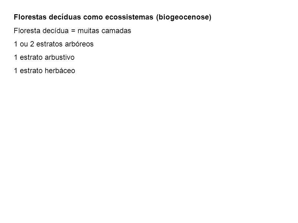 Florestas decíduas como ecossistemas (biogeocenose)