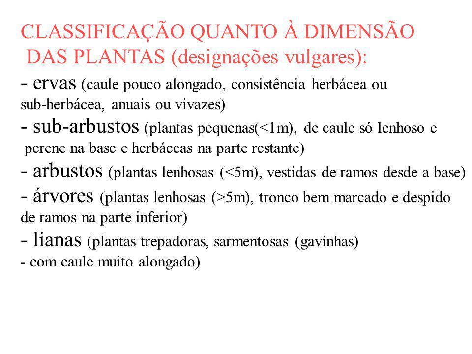 CLASSIFICAÇÃO QUANTO À DIMENSÃO DAS PLANTAS (designações vulgares):