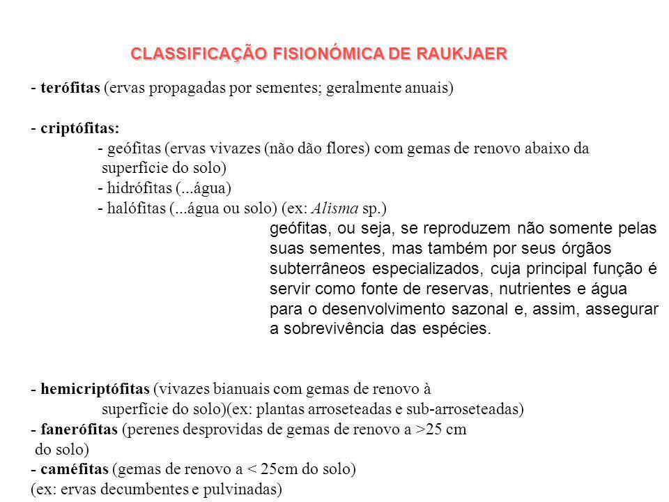CLASSIFICAÇÃO FISIONÓMICA DE RAUKJAER