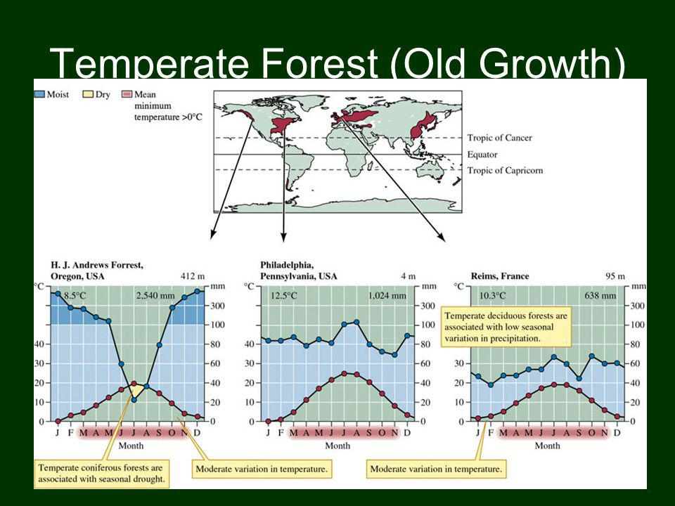 Temperate Forest (Old Growth)