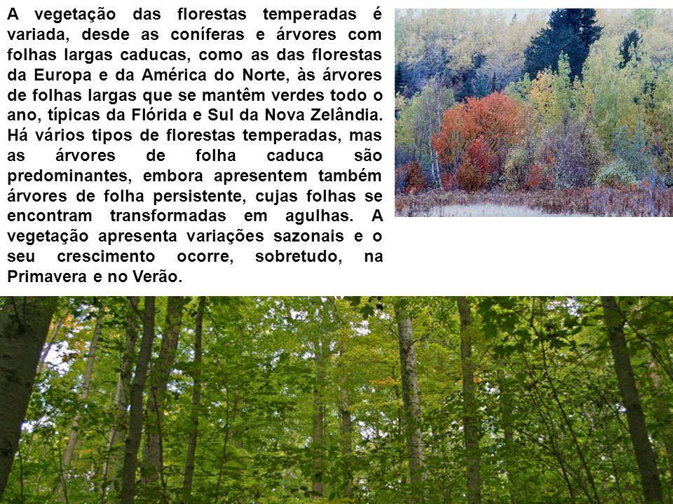 A vegetação das florestas temperadas é variada, desde as coníferas e árvores com folhas largas caducas, como as das florestas da Europa e da América do Norte, às árvores de folhas largas que se mantêm verdes todo o ano, típicas da Flórida e Sul da Nova Zelândia.