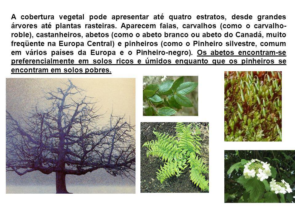 A cobertura vegetal pode apresentar até quatro estratos, desde grandes árvores até plantas rasteiras.