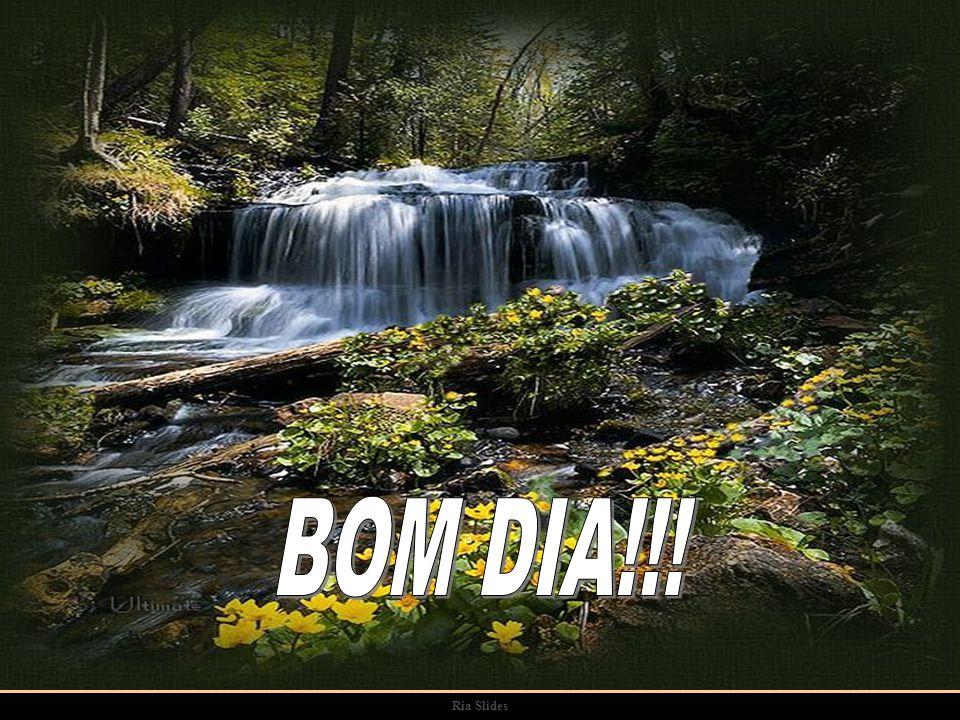 BOM DIA!!! Ria Slides
