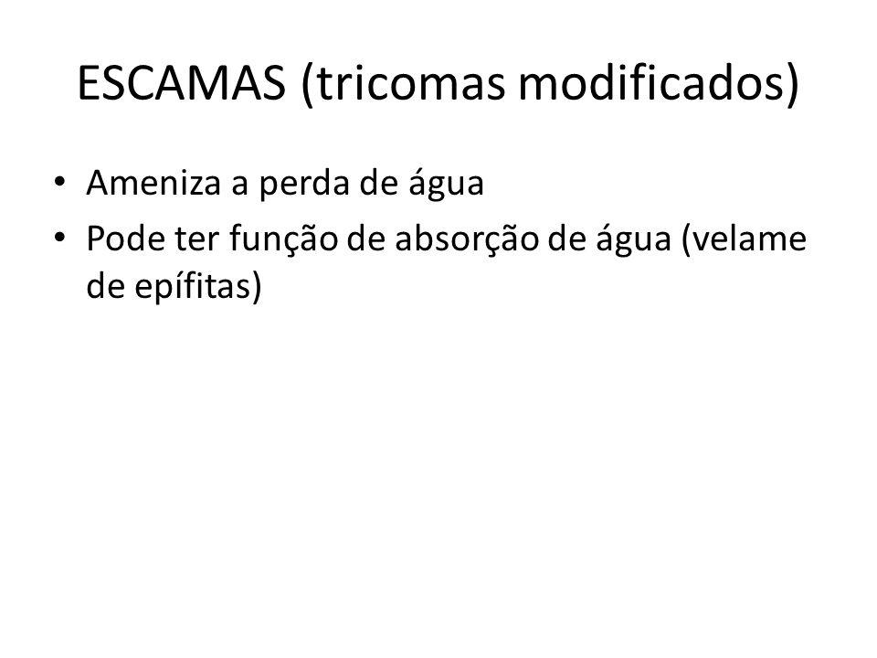 ESCAMAS (tricomas modificados)
