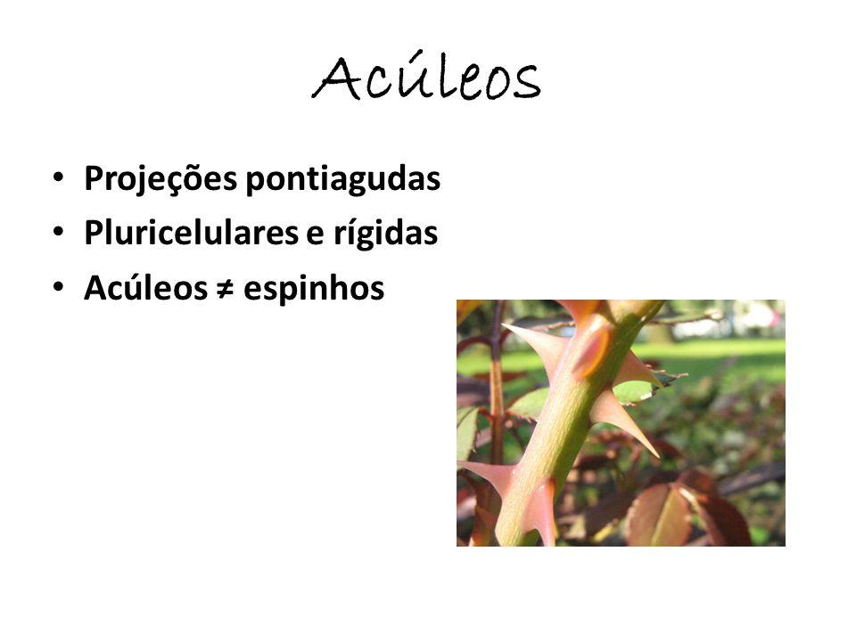 Acúleos Projeções pontiagudas Pluricelulares e rígidas
