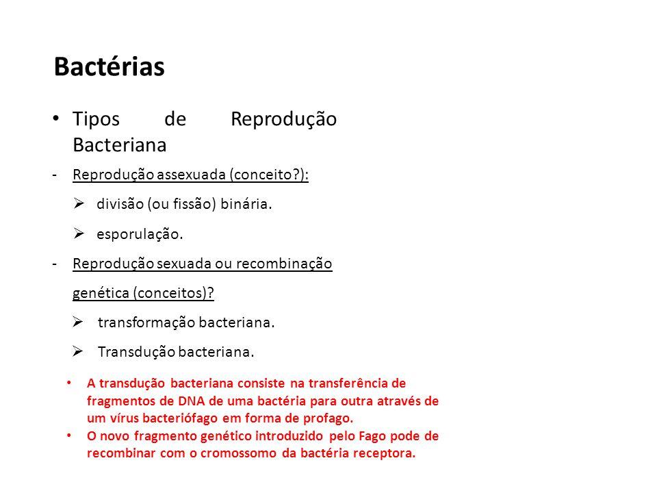 Bactérias Tipos de Reprodução Bacteriana