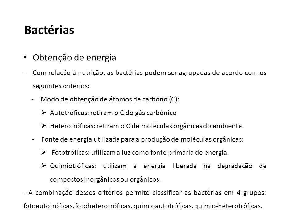 Bactérias Obtenção de energia