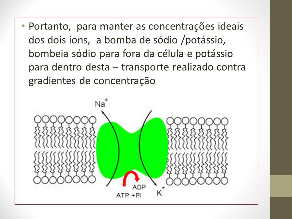 Portanto, para manter as concentrações ideais dos dois íons, a bomba de sódio /potássio, bombeia sódio para fora da célula e potássio para dentro desta – transporte realizado contra gradientes de concentração