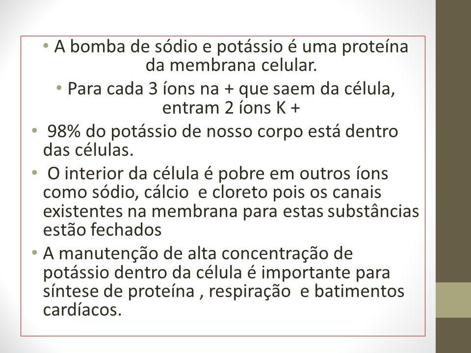 A bomba de sódio e potássio é uma proteína da membrana celular.