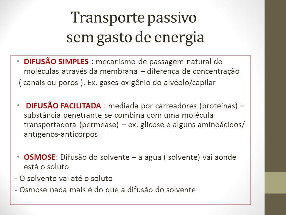 Transporte passivo sem gasto de energia
