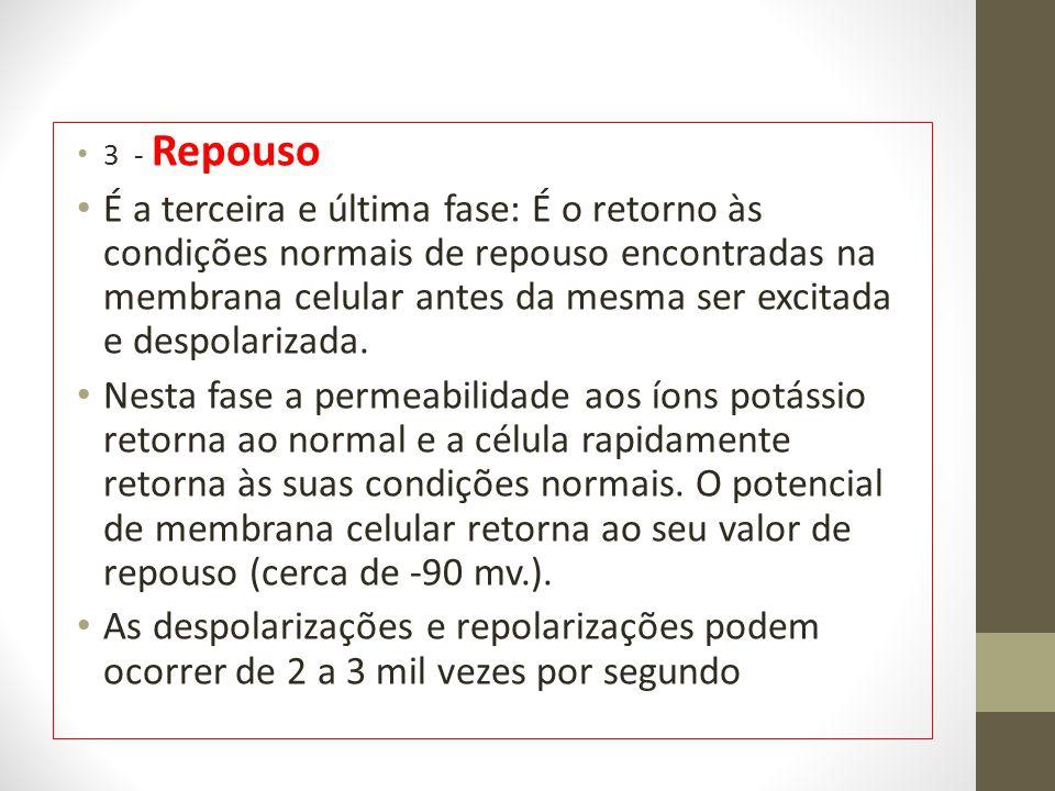 3 - Repouso