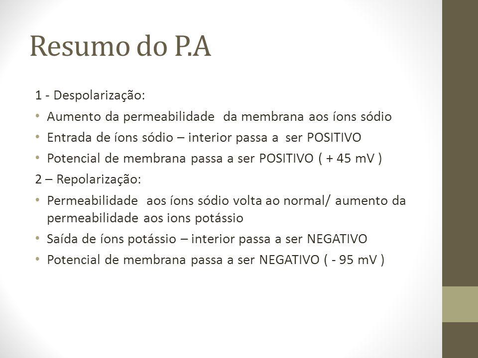 Resumo do P.A 1 - Despolarização: