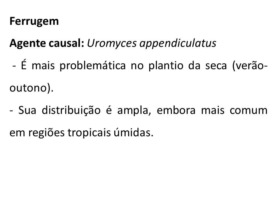 Ferrugem Agente causal: Uromyces appendiculatus. - É mais problemática no plantio da seca (verão-outono).