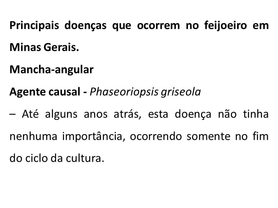 Principais doenças que ocorrem no feijoeiro em Minas Gerais.