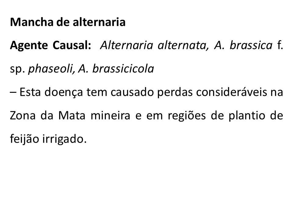 Mancha de alternaria Agente Causal: Alternaria alternata, A. brassica f. sp. phaseoli, A. brassicicola.