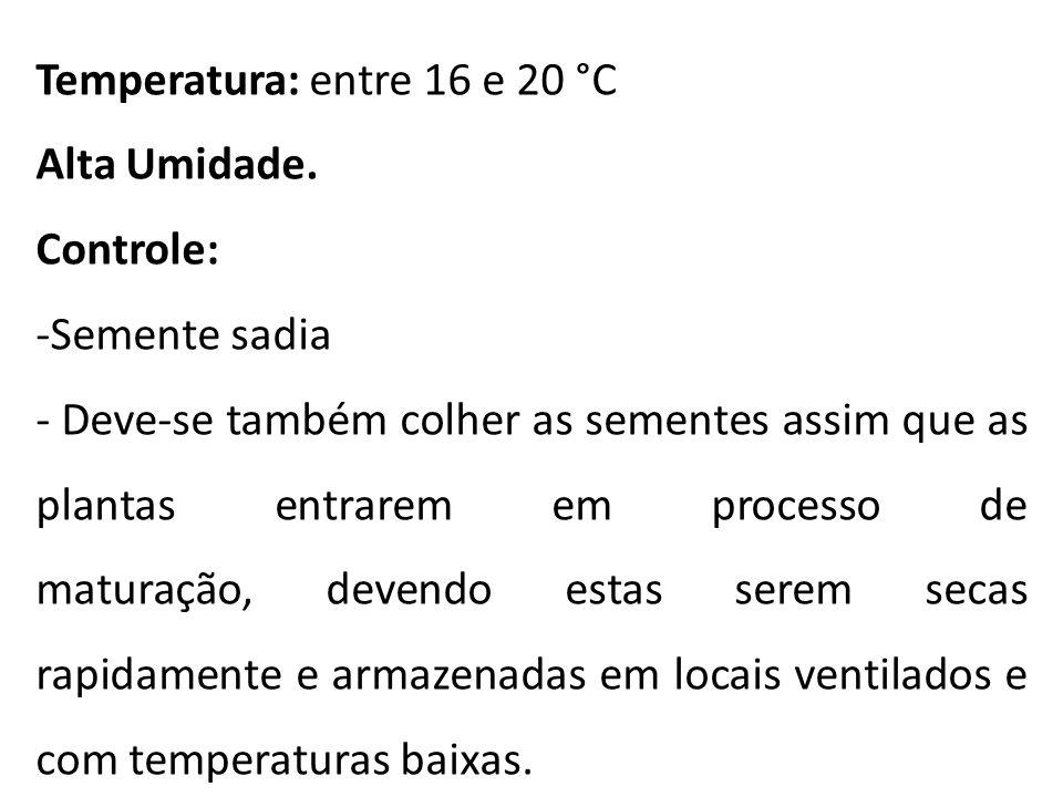 Temperatura: entre 16 e 20 °C