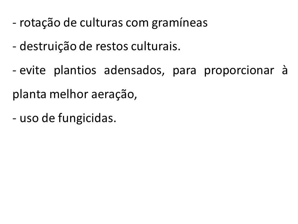 rotação de culturas com gramíneas