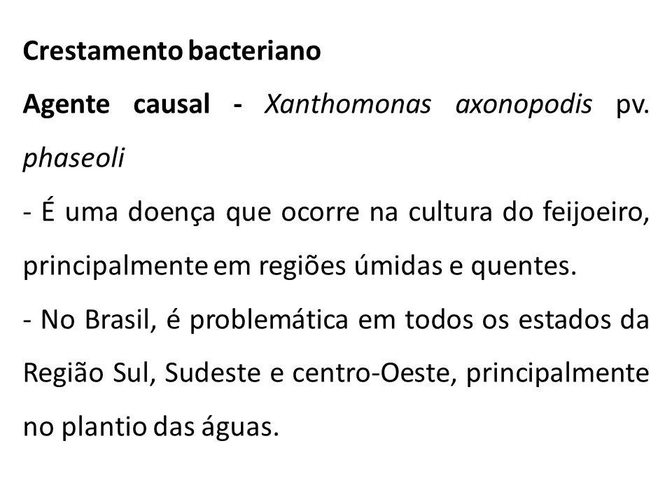 Crestamento bacteriano