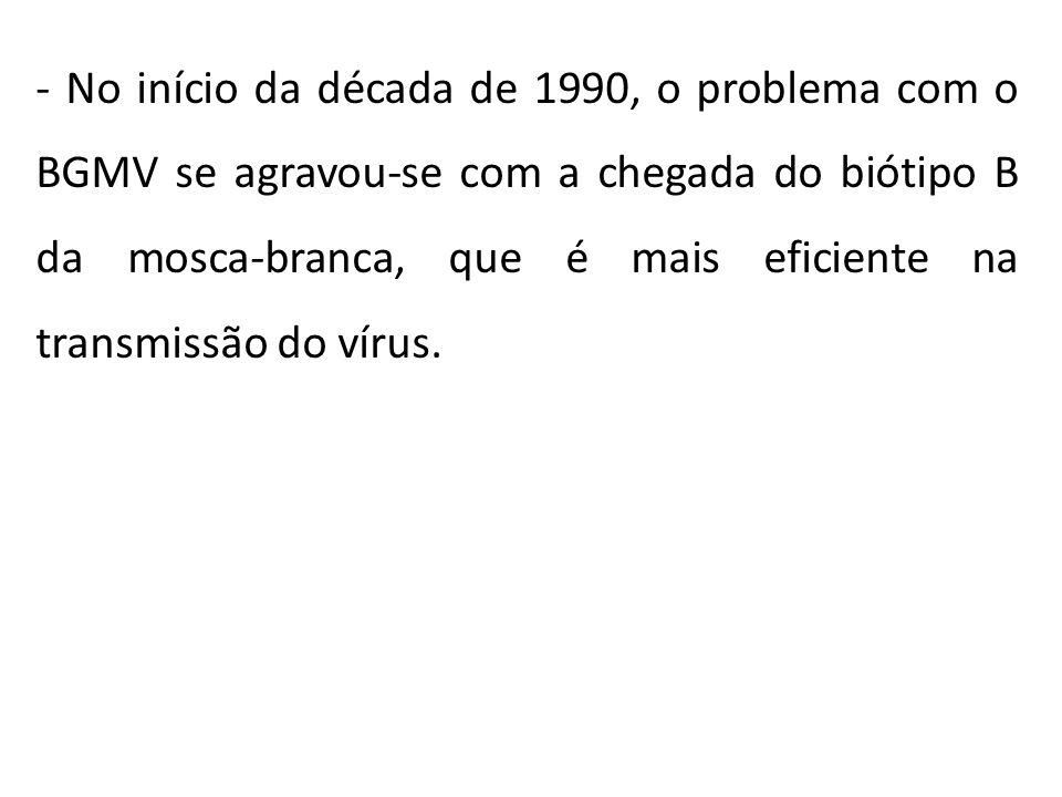 - No início da década de 1990, o problema com o BGMV se agravou-se com a chegada do biótipo B da mosca-branca, que é mais eficiente na transmissão do vírus.