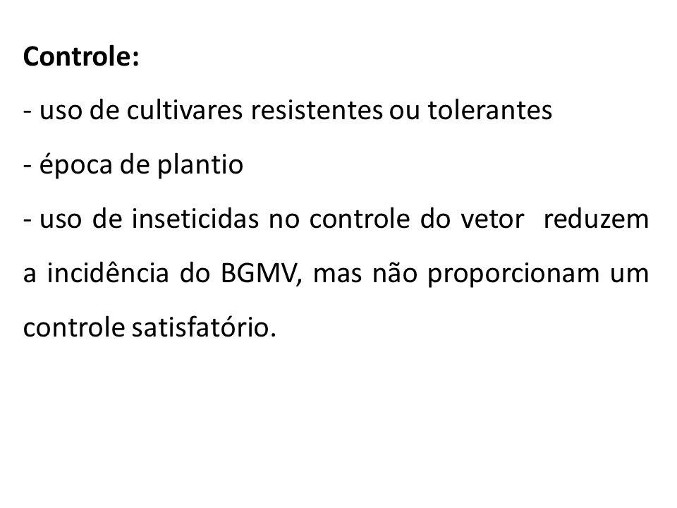 Controle: uso de cultivares resistentes ou tolerantes época de plantio