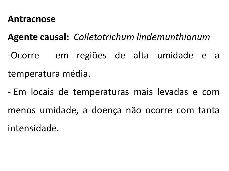 Antracnose Agente causal: Colletotrichum lindemunthianum. Ocorre em regiões de alta umidade e a temperatura média.