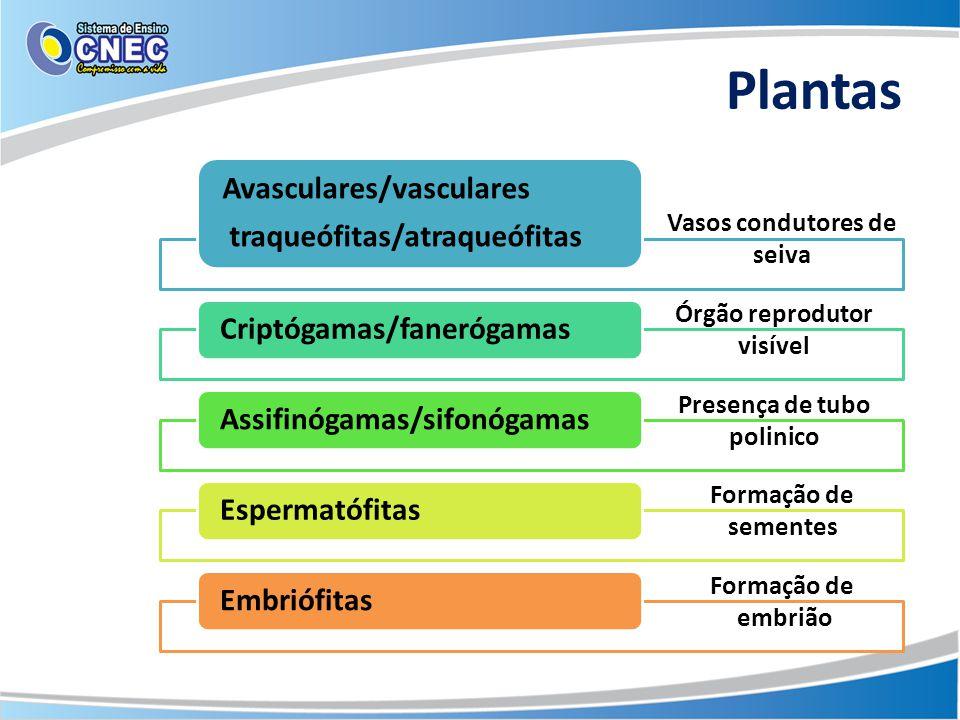 Plantas Avasculares/vasculares traqueófitas/atraqueófitas