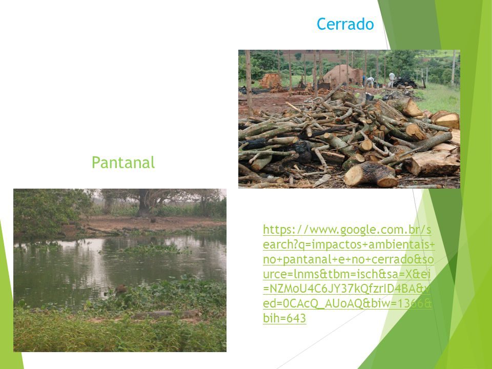 Cerrado Pantanal.