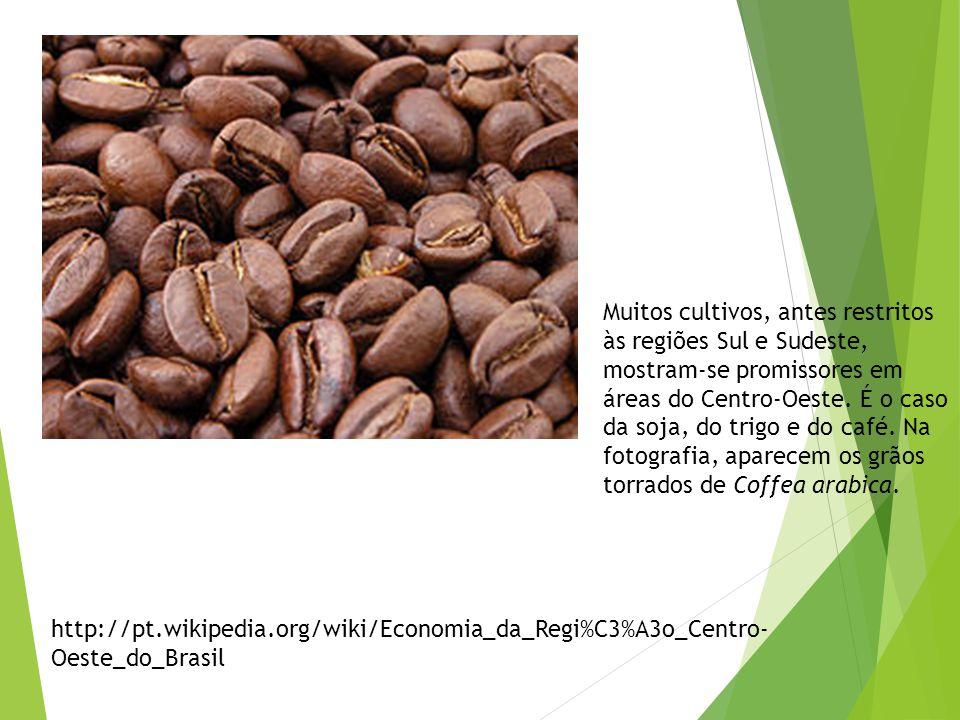 Muitos cultivos, antes restritos às regiões Sul e Sudeste, mostram-se promissores em áreas do Centro-Oeste. É o caso da soja, do trigo e do café. Na fotografia, aparecem os grãos torrados de Coffea arabica.