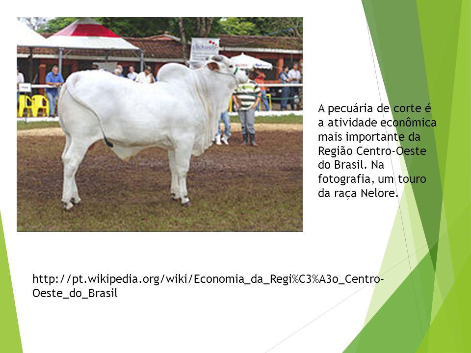A pecuária de corte é a atividade econômica mais importante da Região Centro-Oeste do Brasil. Na fotografia, um touro da raça Nelore.