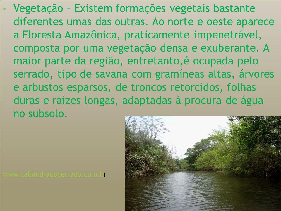 Vegetação – Existem formações vegetais bastante diferentes umas das outras. Ao norte e oeste aparece a Floresta Amazônica, praticamente impenetrável, composta por uma vegetação densa e exuberante. A maior parte da região, entretanto,é ocupada pelo serrado, tipo de savana com gramíneas altas, árvores e arbustos esparsos, de troncos retorcidos, folhas duras e raízes longas, adaptadas à procura de água no subsolo.