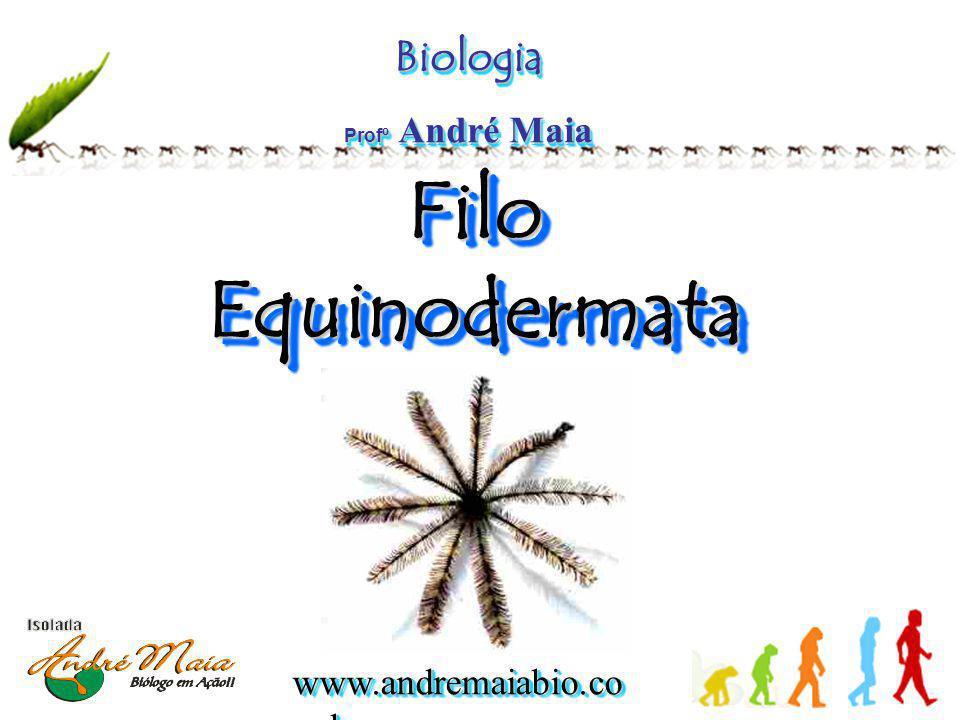 Biologia Profº André Maia Filo Equinodermata