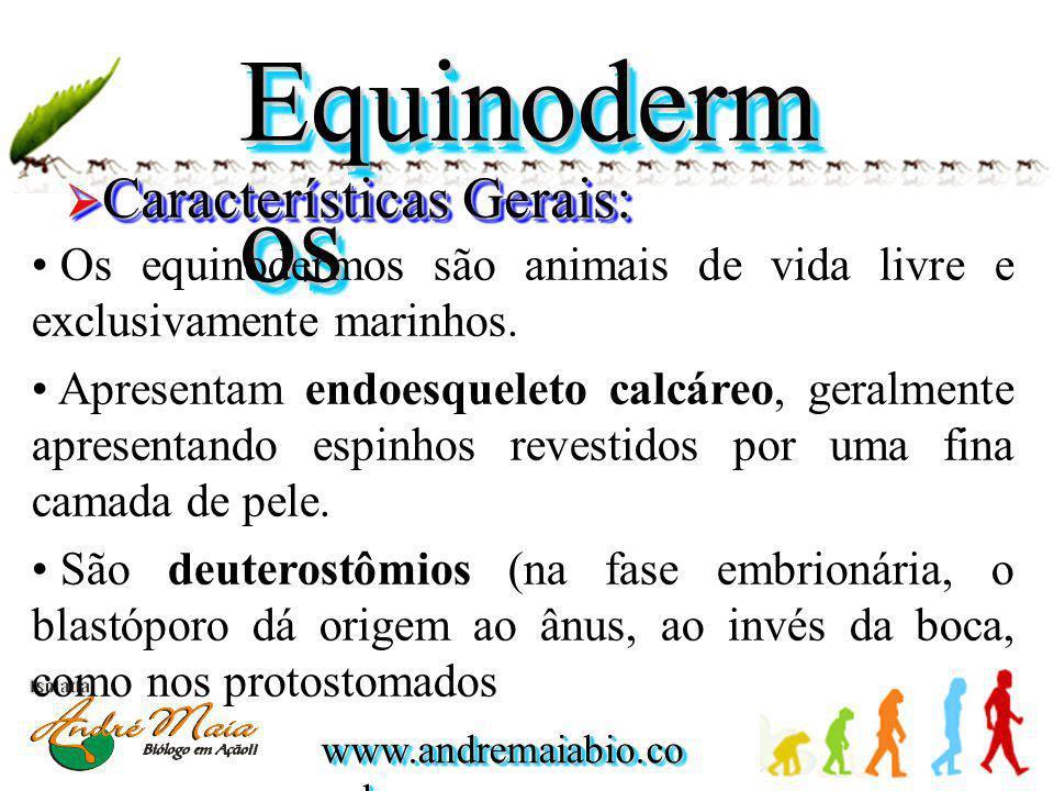 Equinodermos Características Gerais: